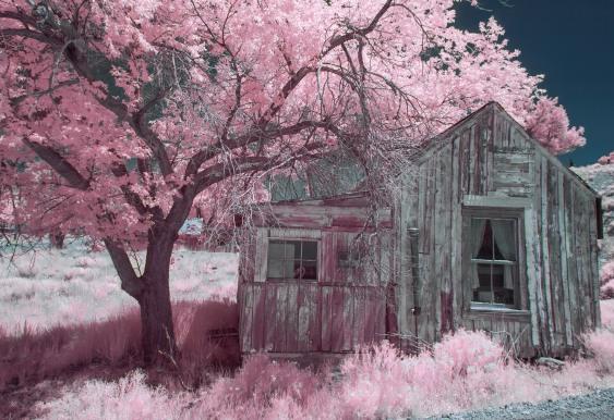 """""""House Under Magenta Tree""""-Manhattan Nevada"""
